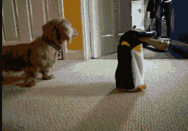 dachshund with penguin