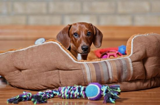 gifts for dachshunds